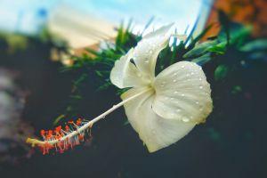 nature photography portrait after the rain bangladesh rainy day flower portrait white flower nature flower wallpaper beautiful flower