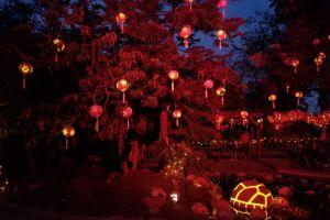 night chinese lanterns red tree night photograph