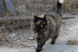 outdoor cat grass cat