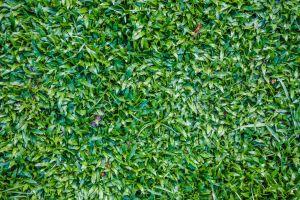 outdoor season down flora closeup texture nature forest sheets design