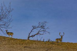 overlook meadow pasture fur mammal summer forest bull adventure nature