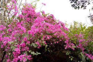 paper flowers flowers wallpaper pink flowers nice flowers