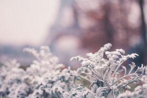 paris flower natural