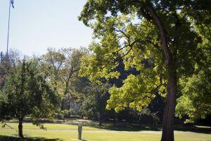 park tree summer