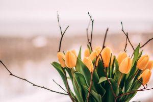 petals bright blossom flowers beautiful focus bloom colors nature tulips