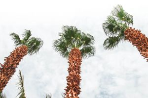 photography morocco palm sky