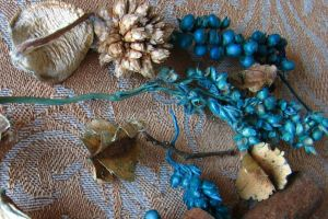plant blue still life texture seeds nature dried plants