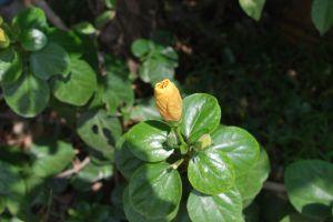 plant flower yellow flower