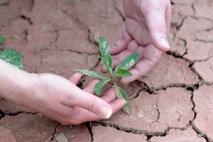 plant hands earth ecology cracked