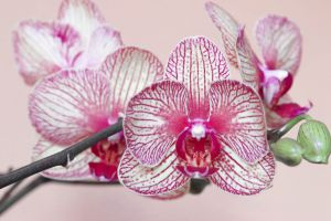 plant orchid flower bloom