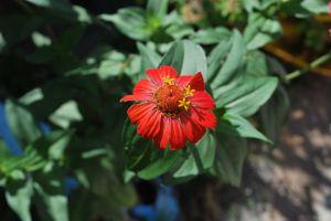 plant red flower flower