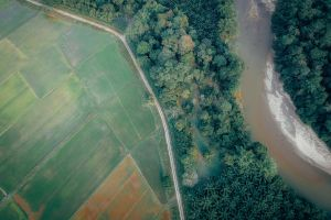 plantation drone photography nature farmland top view aerial shot aerial cropland forest trees