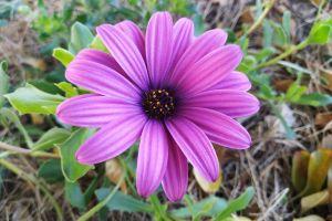 plants flowers purple flower