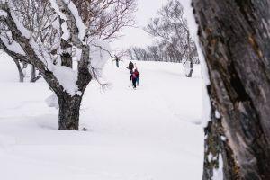 recreation season tree bark winter clothing branches trees blur walking freezing hill