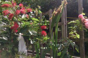 red flower garden plant
