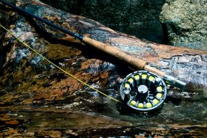 reel nature fly fishing driftwood fishing clear water tropical