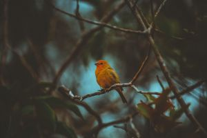 robin branches perched blur finch cute songbird tree daylight little