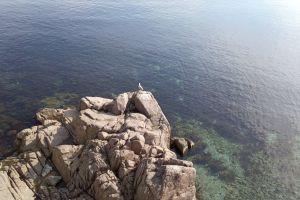 rocks sea sea bird seagull