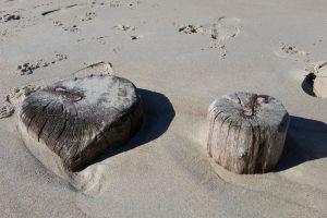 sand-beach wood beach