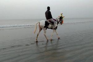 sand water seascape animal ride riding gray seashore horse man