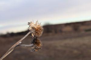 seeds plants wilderness grass texture depth of field