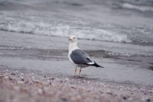 sky bird white landing bird white flying birds white bird flying bird beach front blacksea sky