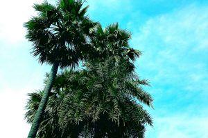 skylight nature background cool wallpaper hd wallpapers flora phone wallpaper palm trees blue sky lock screen wallpaper green leaves