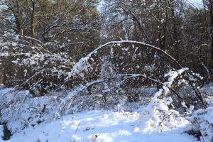 snow snow on tree basing wood tree