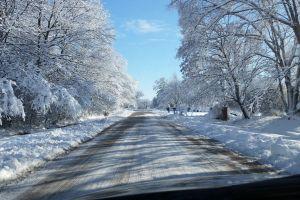 snow trees street