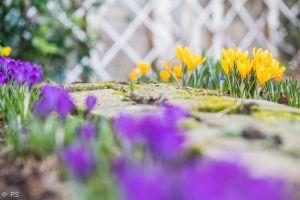 spring flower garden yellow