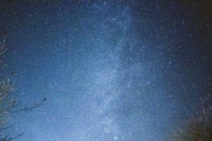 stars galaxy tree night milky way tree branches clear sky