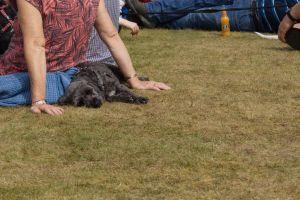 summer dog dry grass