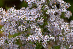 summer flowers nature