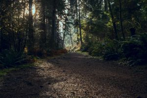 sunrise nature magical forest light old forest rain moody forest reference ecology