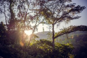sunrise trees rainforest jungle costa rica