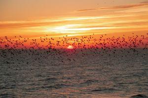sunset beach sunset by the sea