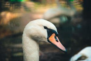 swan nature nature park