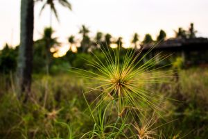thorns plants spikes grass greens sunset