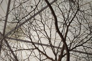 tree abstract background white