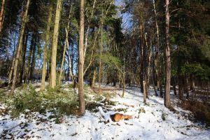 tree basing wood snow on tree snow
