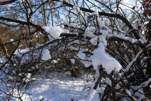 tree basing wood snow snow on tree