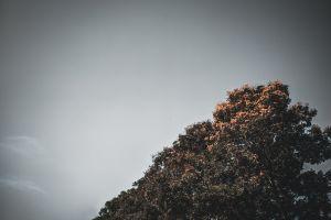 tree #mobilechallenge 4k wallpaper hd wallpaper smartphone photography green hd wallpapers clear sky xiaomi blue sky