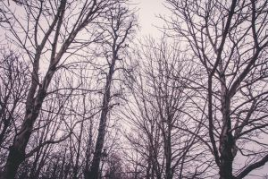 trees city natural paris