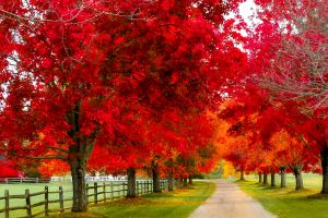 trees fence path red