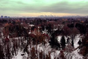 trees forest woods from above aerial shot bird's eye view snow cold winter