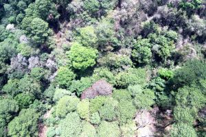 trees green forest bosque nature woods drone