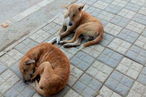 two street dogs wallpaper
