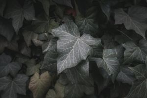 vibes 4k wallpaper moody green matt hatchett dark nature
