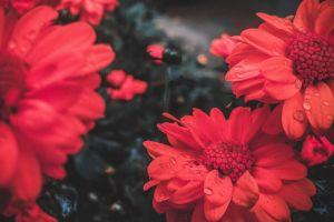 waterdrops #mobilechallenge 4k wallpaper close up blurred background beautiful flowers hd wallpaper