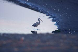 white bird sea bird sea bird watching